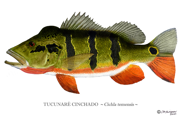 meet the monoculus bass