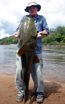 Jau - Giant Amazon Catfish