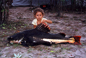 pirarara - red-tailed catfishRedtail Catfish
