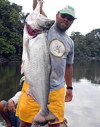 trophy payara