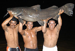 Jau - World Record Giant Amazon Catfish