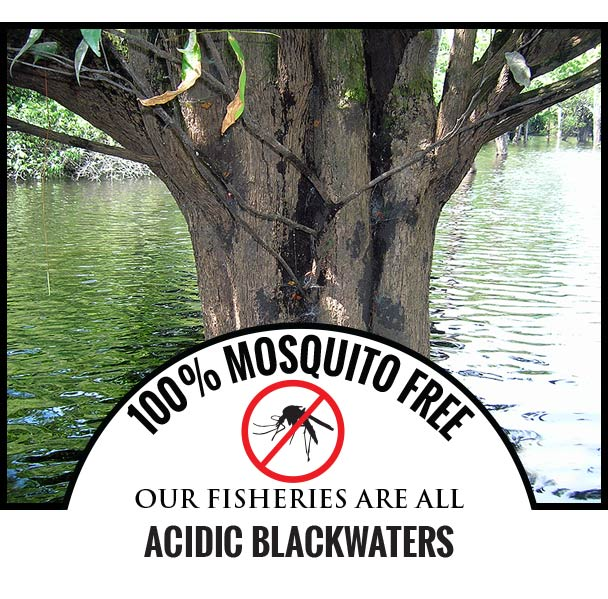 100% MOSQUITO FREE OUR FISHERIES ARE ALL ACIDIC BLACKWATERS